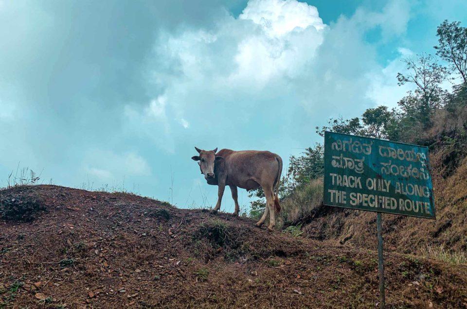 Kodachadri, a dream trek